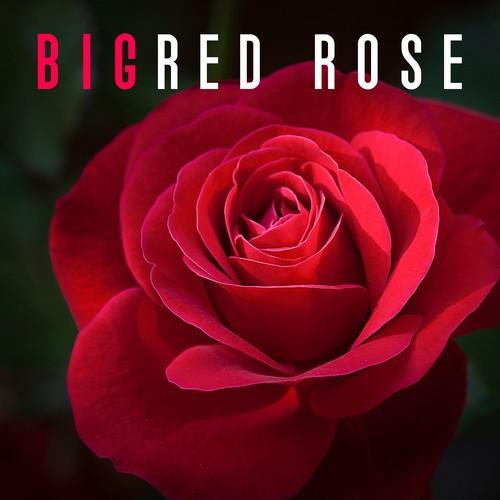 Increase Love Song - Download Big Red Rose - True Love