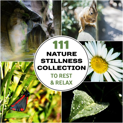 Travel With Bells & Sounds Song - Download 111 Nature Stillness