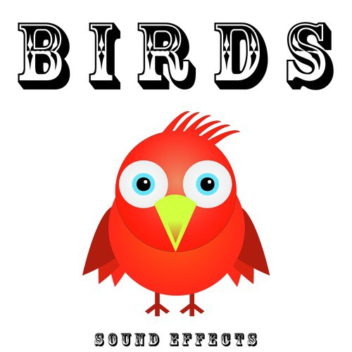 Hens Clucking Song - Download Birds Sound Effects Song