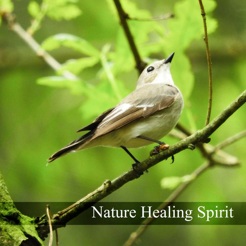 Nature Healing Spirit (Soothing Sounds For Mind, Body, Soul, Music