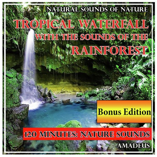 Campfire In A Moonlit Forest: Natural Sounds Song - Download